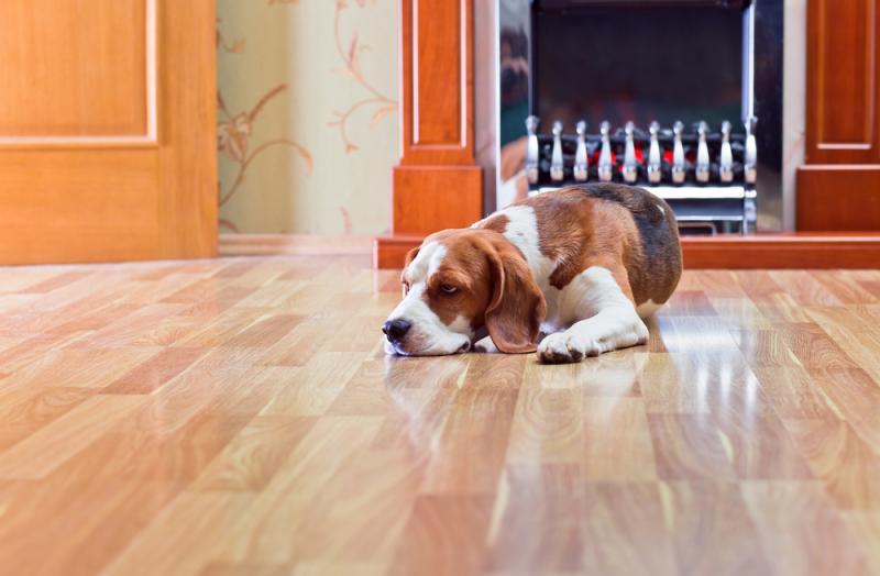 """""""Cómo evitar arruinar tu piso de parquet"""""""